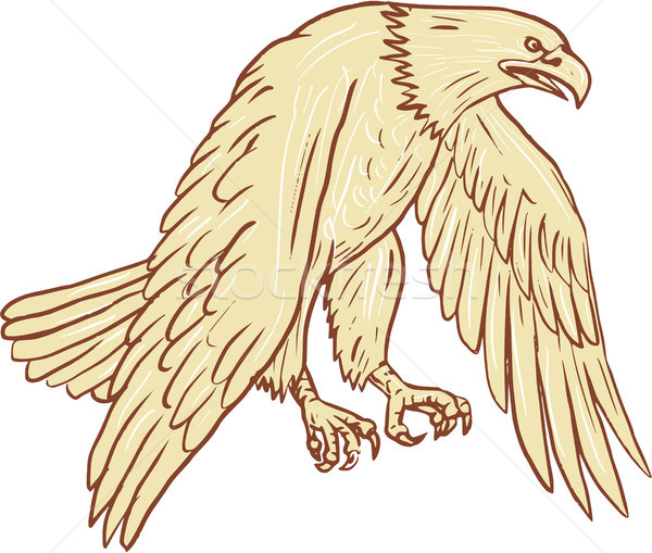 Bald Eagle Flying Wings Down Drawing Stock photo © patrimonio