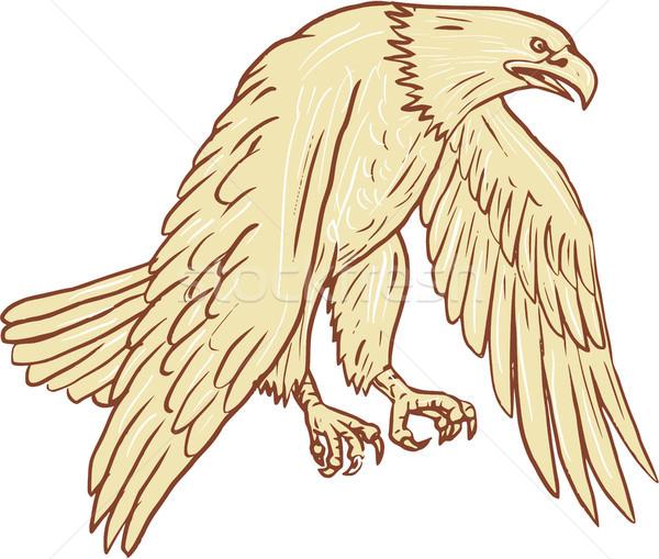 Kopasz sas repülés szárnyak lefelé rajz Stock fotó © patrimonio
