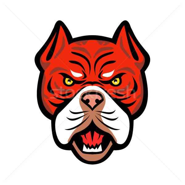 Red Tiger Bulldog Head Front Mascot Stock photo © patrimonio