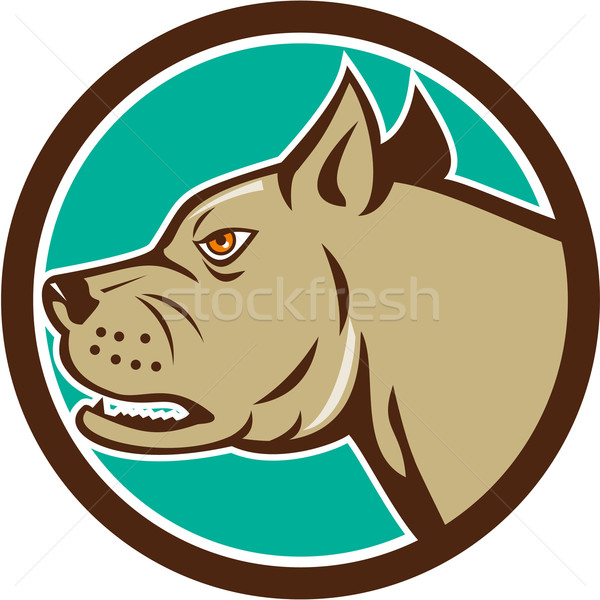 Mastiff Dog Mongrel Head Circle Cartoon Stock photo © patrimonio
