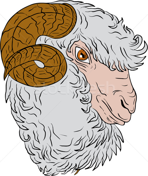 Merino Ram Sheep Head Drawing Stock photo © patrimonio