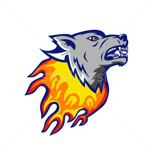 Vlammende wolf hoofd brand geïsoleerd illustratie Stockfoto © patrimonio