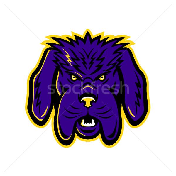 Newfoundland Dog Mascot Angry Stock photo © patrimonio