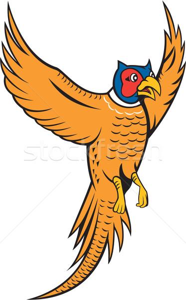 Madár baromfi repülés rajz illusztráció felfelé Stock fotó © patrimonio