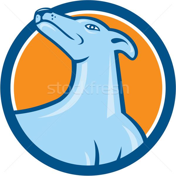 Galgo cão cabeça desenho animado ilustração Foto stock © patrimonio