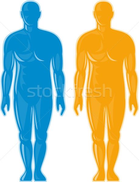 Masculino anatomia humana em pé ilustração homem Foto stock © patrimonio