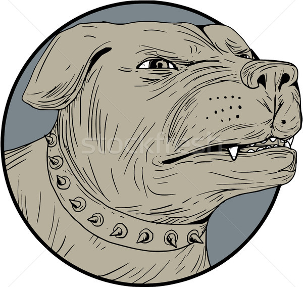 Rottweiler Guard Dog Head Angry Drawing Stock photo © patrimonio