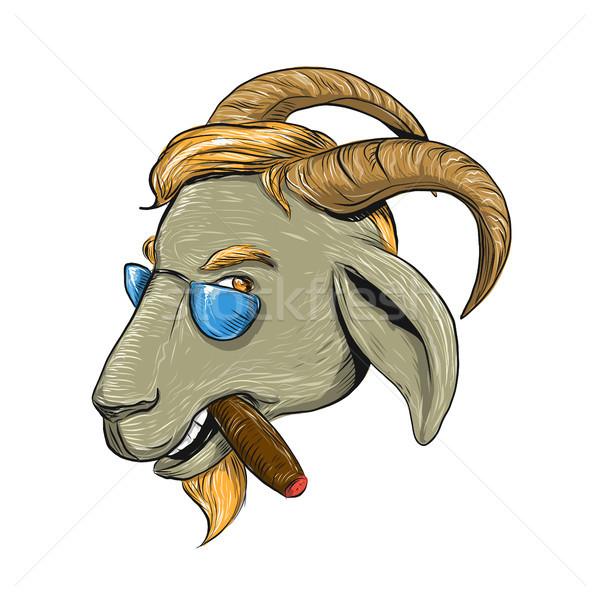 Csípő kecske dohányzás szivar rajz rajz Stock fotó © patrimonio