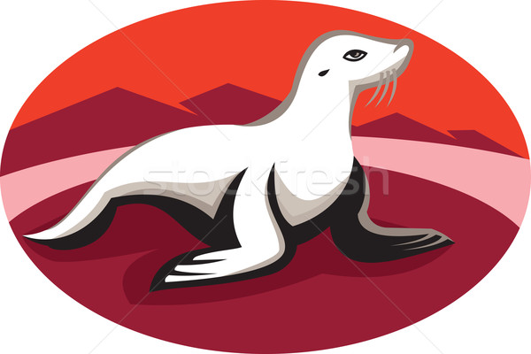 New Zealand Fur Seal Retro Stock photo © patrimonio