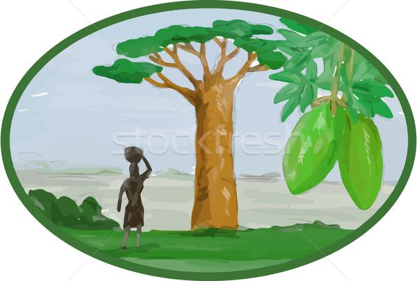 Baobab Tree and Fruit Watercolor Stock photo © patrimonio
