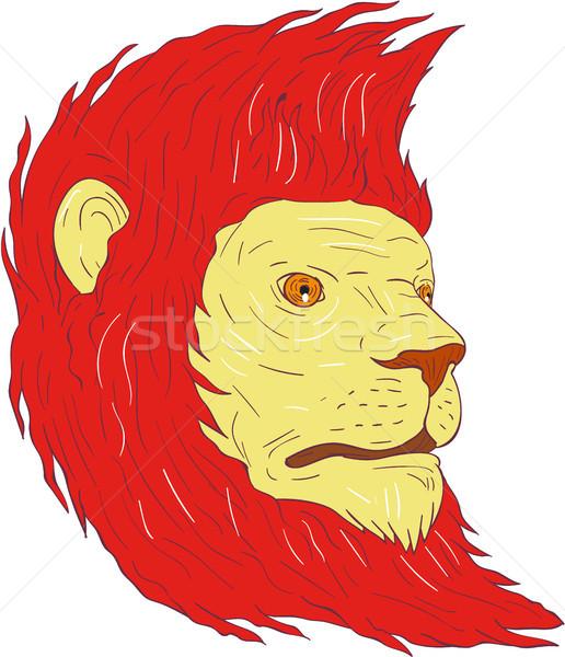 Lion Head With Flowing Mane Drawing Stock photo © patrimonio
