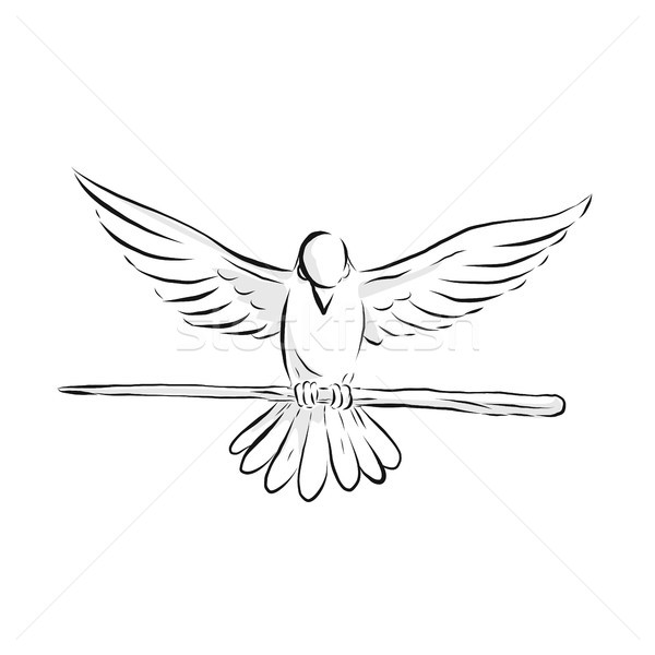 Soaring Dove Clutching Staff Front Drawing Stock photo © patrimonio