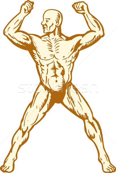 Masculino anatomia humana corpo construtor músculo ilustração Foto stock © patrimonio