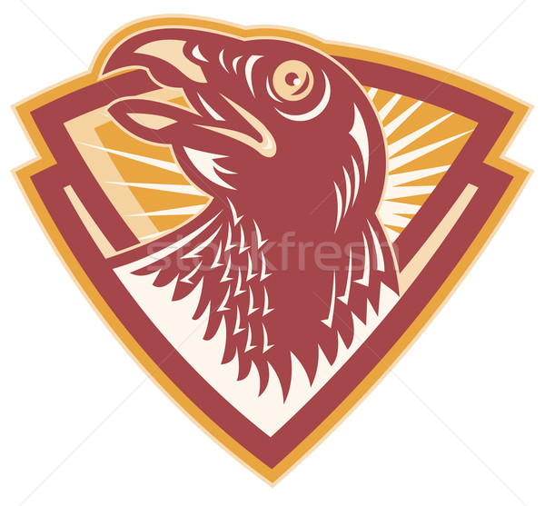 Hawk Falcon Bird Head Shield Stock photo © patrimonio