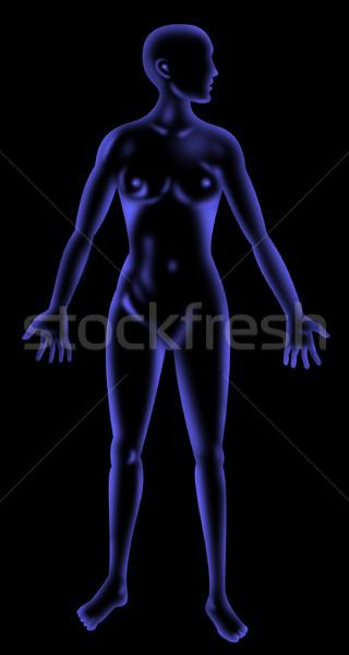 Masculino anatomia humana em pé raio x estilo ilustração Foto stock © patrimonio
