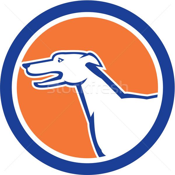 Greyhound Dog Head Side Retro Circle Stock photo © patrimonio
