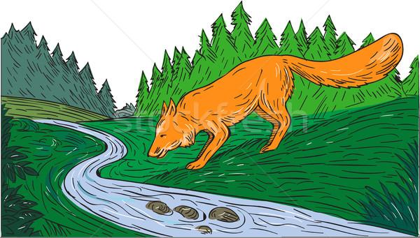 Raposa potável rio mata enseada desenho Foto stock © patrimonio