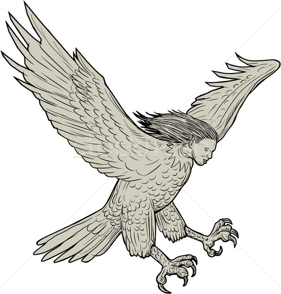 Harpy Swooping Drawing  Stock photo © patrimonio