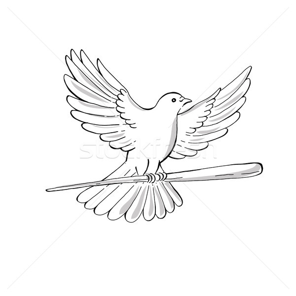 Pigeon or Dove Flying With Cane Drawing Stock photo © patrimonio