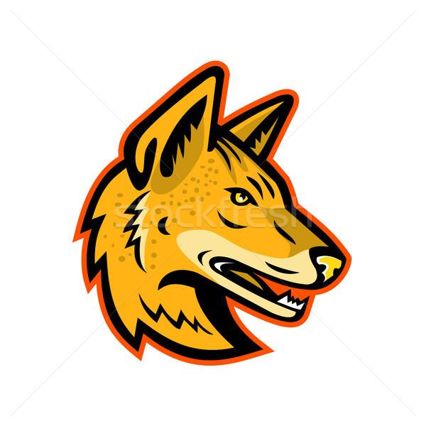 Arabian Wolf Head Mascot Stock photo © patrimonio