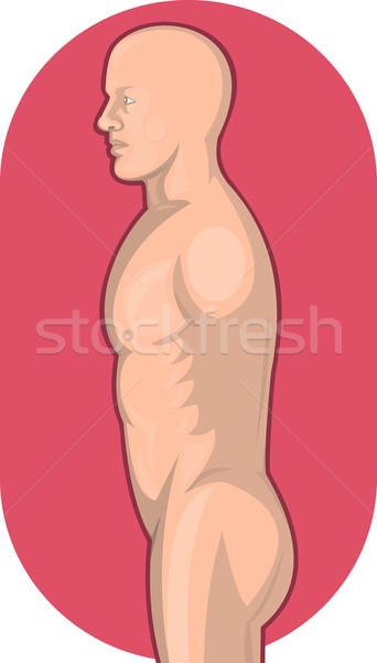 Masculino anatomia humana em pé vista lateral ilustração cintura Foto stock © patrimonio