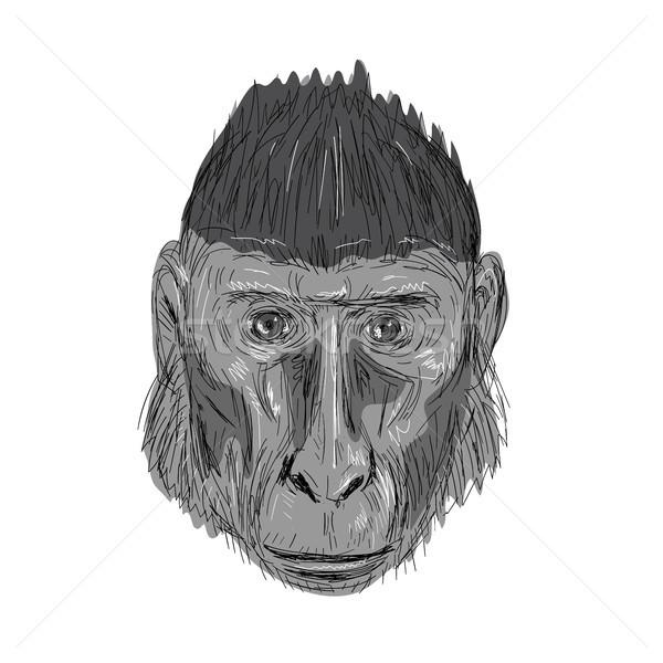 Crested Black Macaque Head Drawing Stock photo © patrimonio