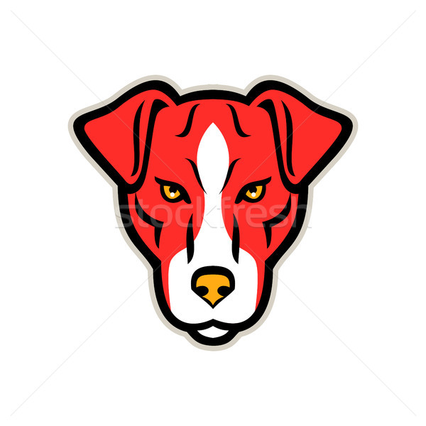 Stock photo: Plummer Terrier Dog Front Mascot