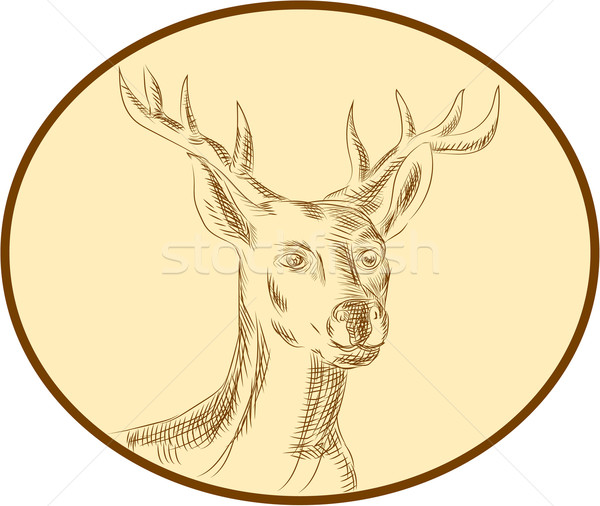 Red Stag Deer Head Circle Etching Stock photo © patrimonio