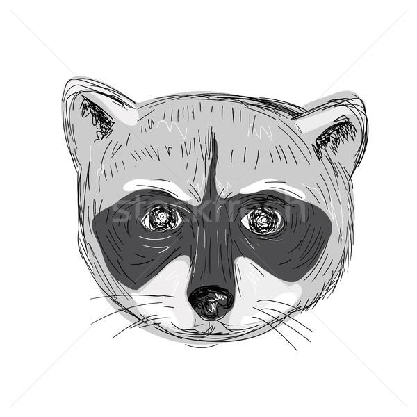 Wasbeer hoofd tekening illustratie Stockfoto © patrimonio