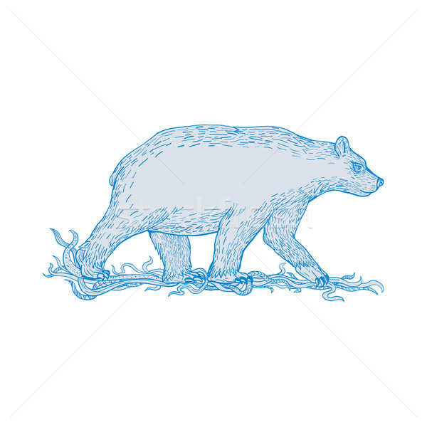 Polar Bear Walking Side Drawing Stock photo © patrimonio