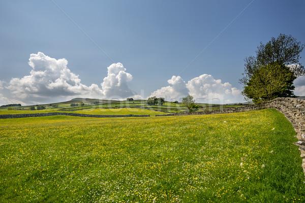 диких цветов луговой Полевые цветы небе Сток-фото © paulfleet