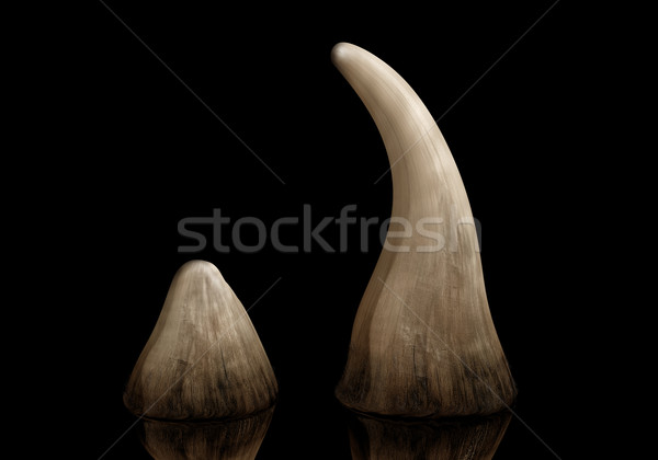 Rhino horn Stock photo © paulfleet