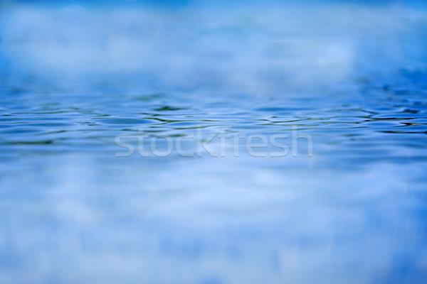Azul água raso foco olhando oceano Foto stock © paulfleet