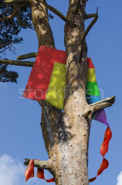 Stock photo: Kite stuck in a tree