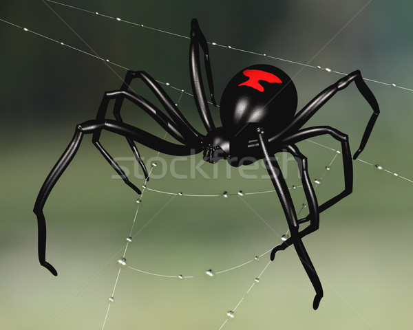 Black Widow Spider Stock photo © paulfleet