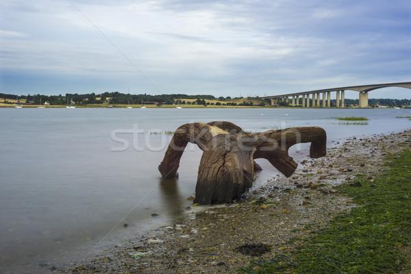 Oude boom landschap brug rivier Stockfoto © paulfleet