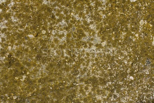 Muschio concrete superficie texture abstract rock Foto d'archivio © paulfleet