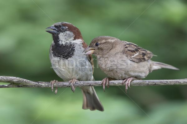 2 家 男性 女性 夏 鳥 ストックフォト © paulfleet
