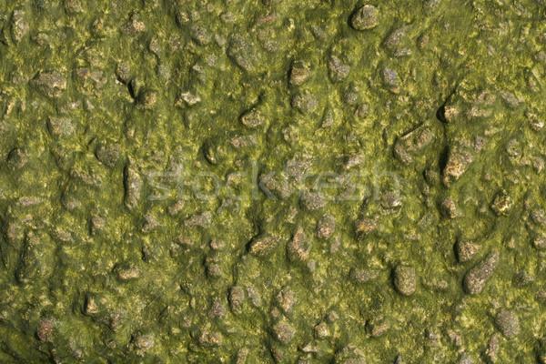 Wodorost pokryty port ściany konkretnych zielone Zdjęcia stock © paulfleet