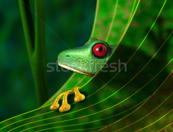 Endangered Rainforest Tree Frog Stock photo © paulfleet