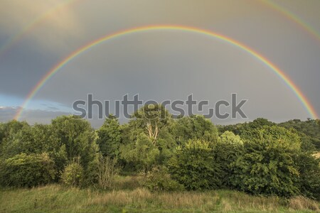 Doubler Rainbow nature arbres pluie Photo stock © paulfleet