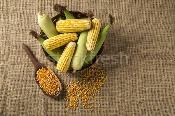 Ear of corn, revealing yellow kernels Stock photo © paulovilela
