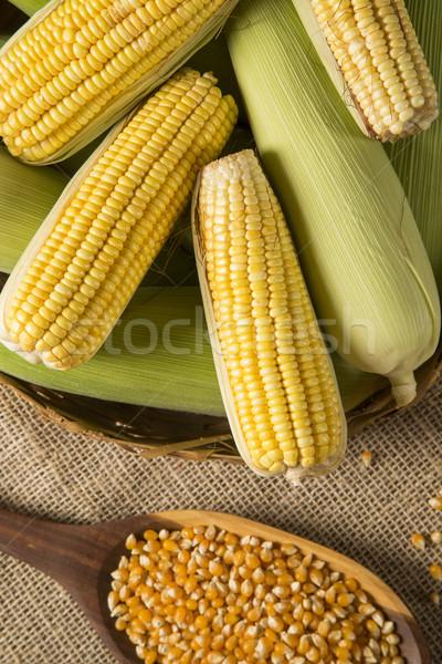 Ear of corn, revealing yellow kernels Stock photo © paulovilela