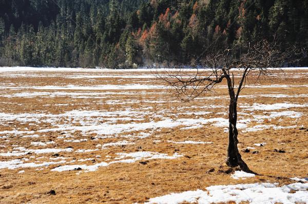 Gras grond China hemel bos landschap Stockfoto © paulwongkwan