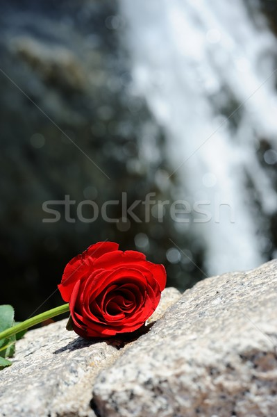 Waterval steeg Rood rose vergadering paard reizen Stockfoto © paulwongkwan