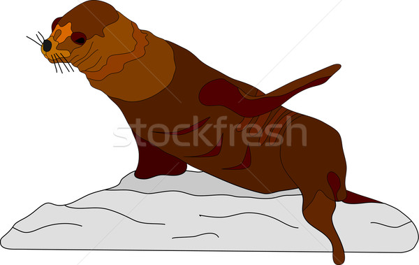 Sea Lion Stock photo © pavelmidi