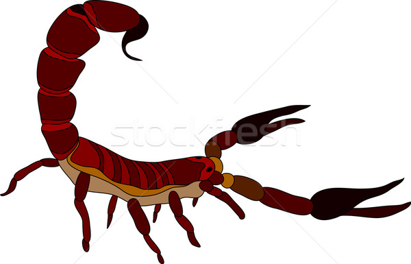 scorpion Stock photo © pavelmidi