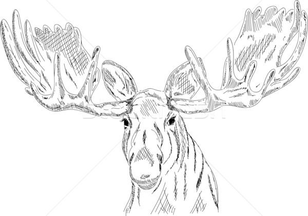 elk head  Stock photo © pavelmidi
