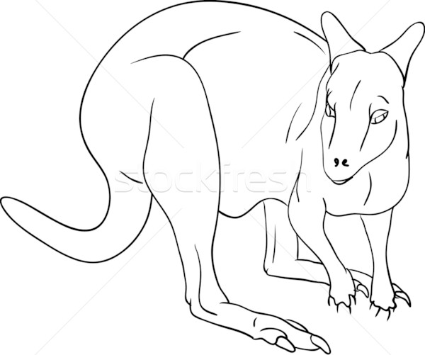 kangaroo Stock photo © pavelmidi