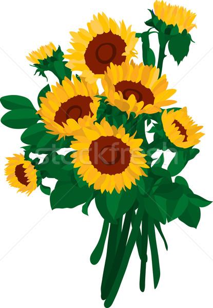 Girassol buquê girassóis flor abstrato natureza Foto stock © pavelmidi
